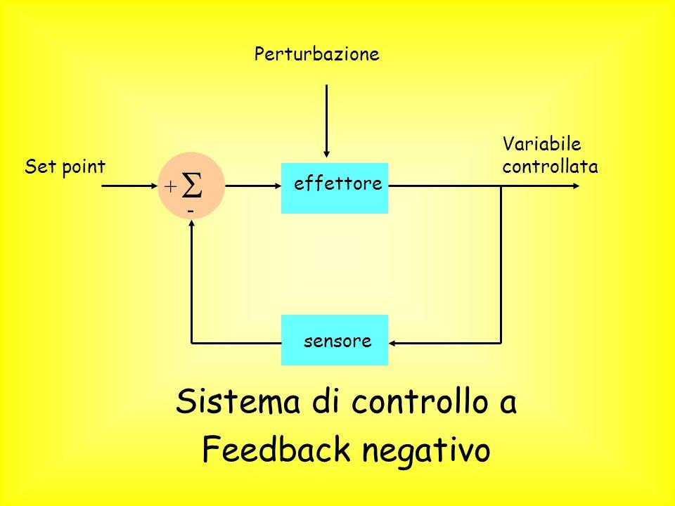 Set point sensore Variabile controllata effettore + - Perturbazione Sistema di controllo a Feedback negativo