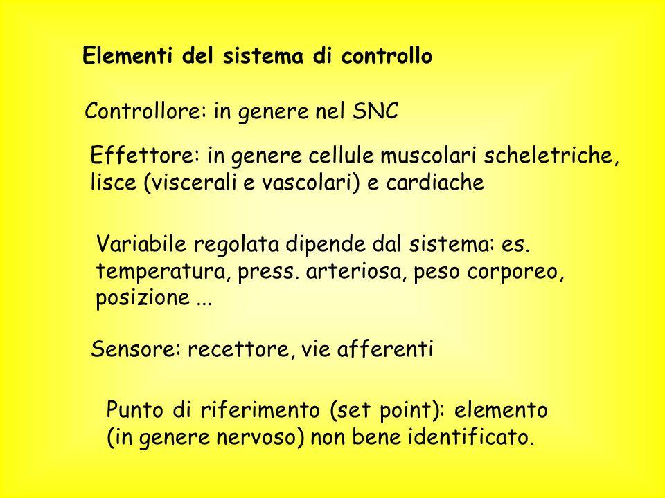 Elementi del sistema di controllo Controllore: in genere nel SNC Effettore: in genere cellule muscolari scheletriche, lisce (viscerali e vascolari) e