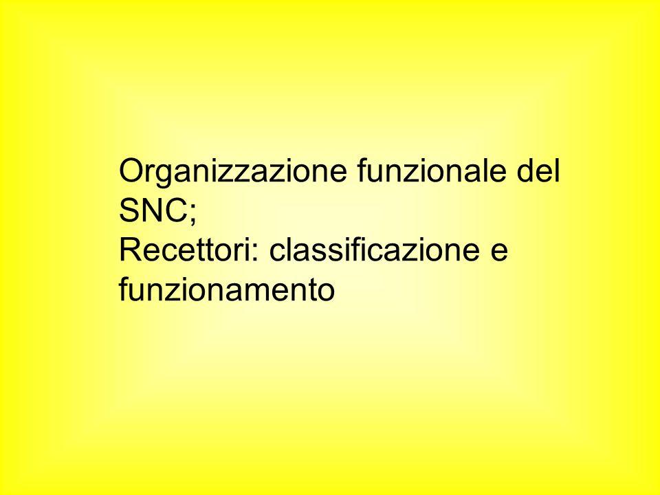 Organizzazione funzionale del SNC; Recettori: classificazione e funzionamento