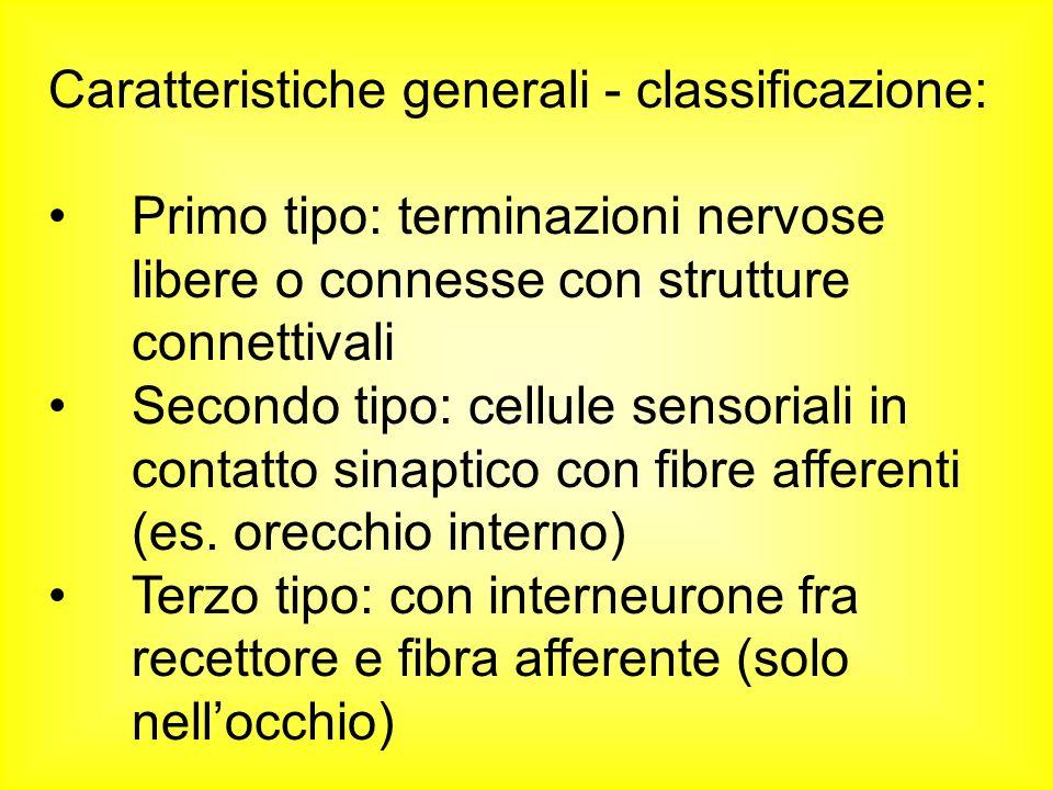 Caratteristiche generali - classificazione: Primo tipo: terminazioni nervose libere o connesse con strutture connettivali Secondo tipo: cellule sensor