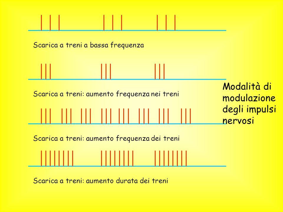 Scarica a treni: aumento frequenza nei treni Scarica a treni: aumento frequenza dei treni Scarica a treni: aumento durata dei treni Modalità di modula