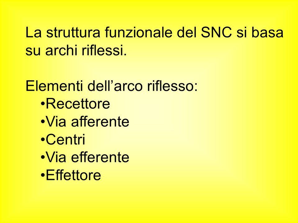 La struttura funzionale del SNC si basa su archi riflessi. Elementi dellarco riflesso: Recettore Via afferente Centri Via efferente Effettore