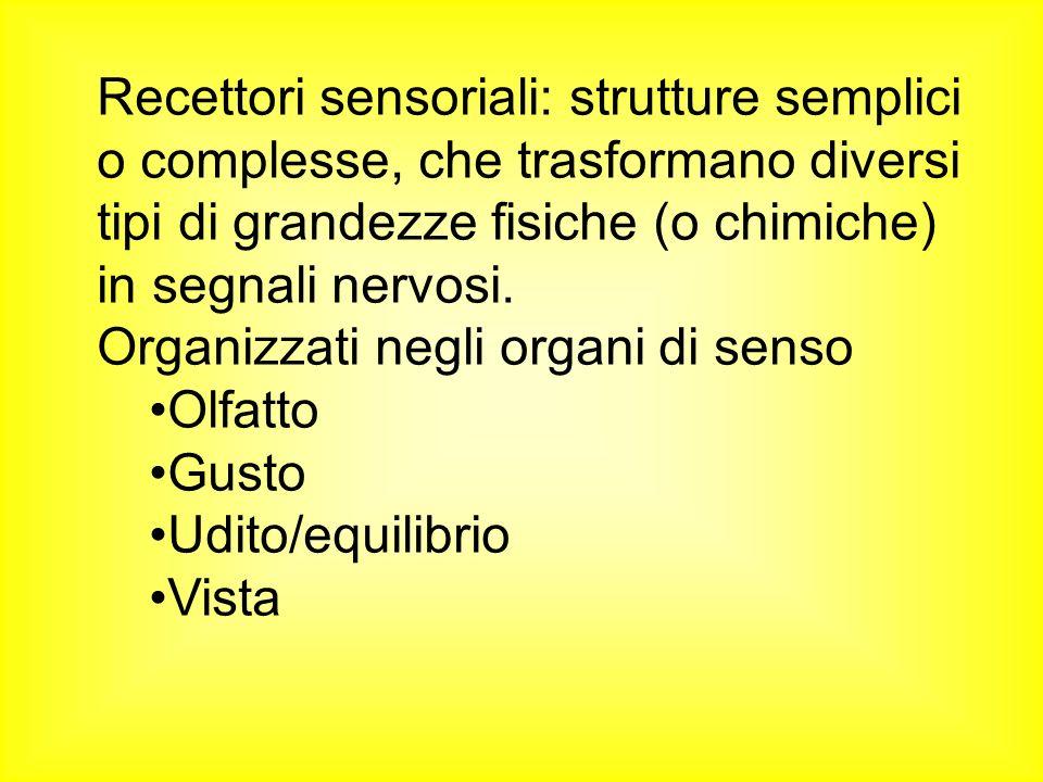 Recettori sensoriali: strutture semplici o complesse, che trasformano diversi tipi di grandezze fisiche (o chimiche) in segnali nervosi. Organizzati n