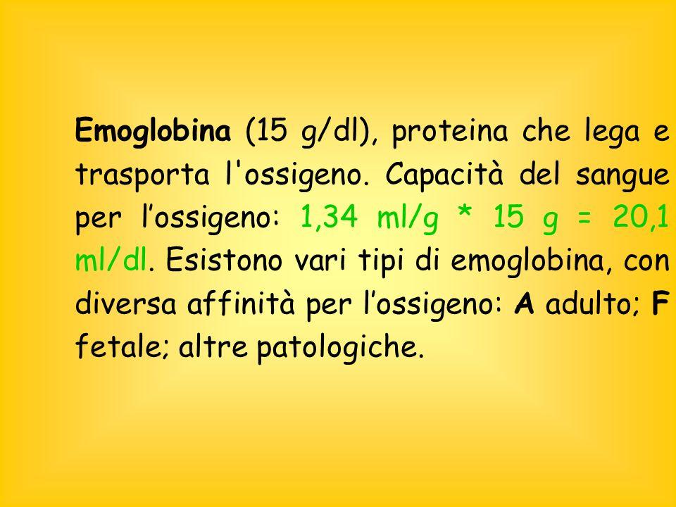 Emoglobina (15 g/dl), proteina che lega e trasporta l ossigeno.