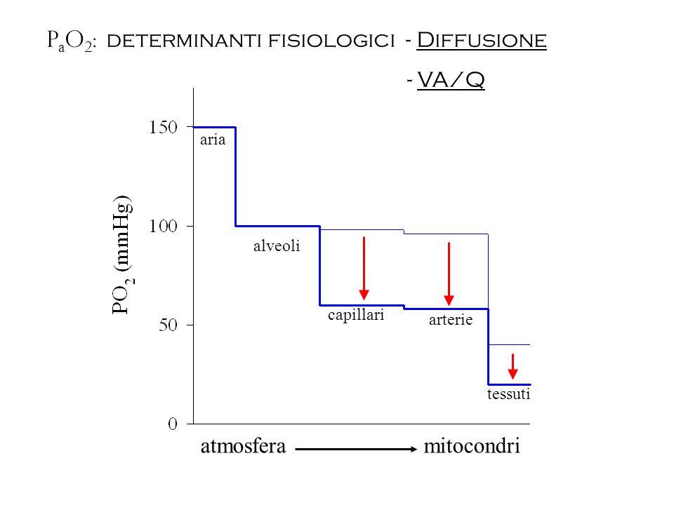 atmosfera mitocondri aria alveoli capillari arterie tessuti - VA/Q