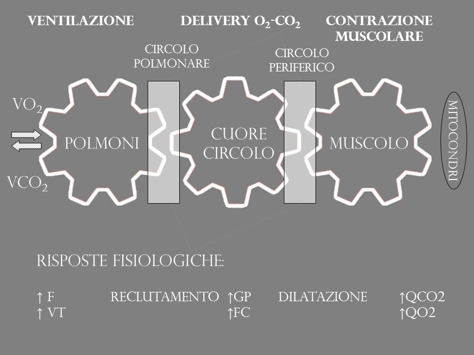 VO 2 VCO 2 mitocondri polmoni Cuore circolo muscolo Circolo polmonare Circolo periferico ventilazioneDelivery O 2 -CO 2 Contrazione muscolare Risposte