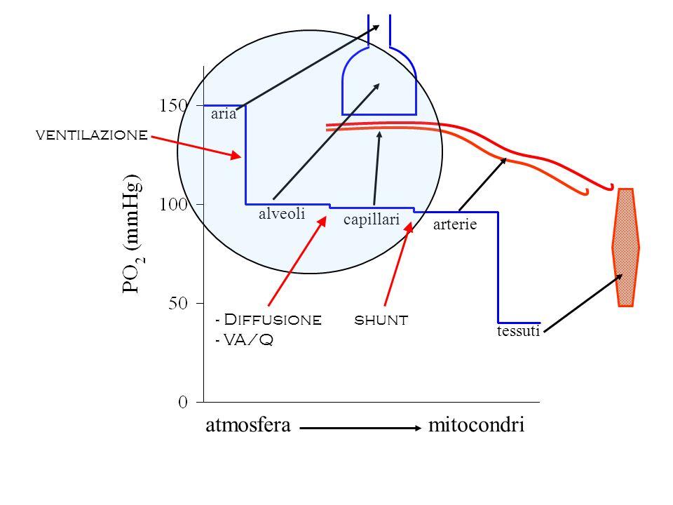 atmosfera mitocondri capillari alveoli aria arterie tessuti ventilazione - Diffusione - VA/Q shunt