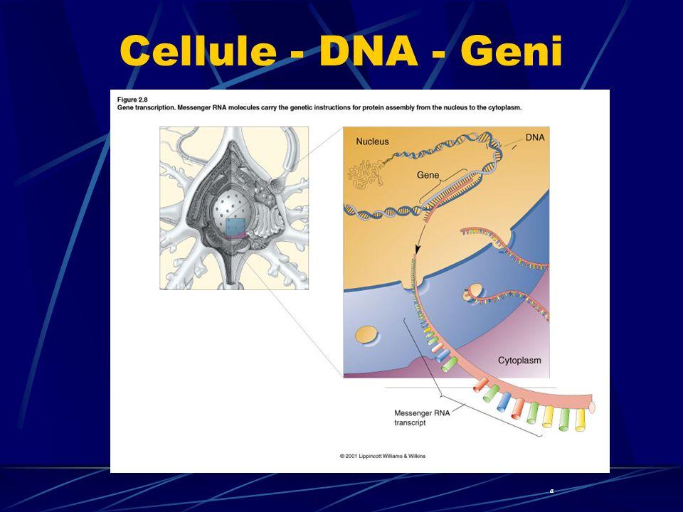 Cellule - DNA - Geni a