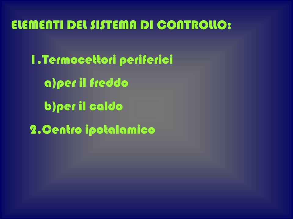 1.Termocettori periferici a)per il freddo b)per il caldo 2.Centro ipotalamico ELEMENTI DEL SISTEMA DI CONTROLLO: