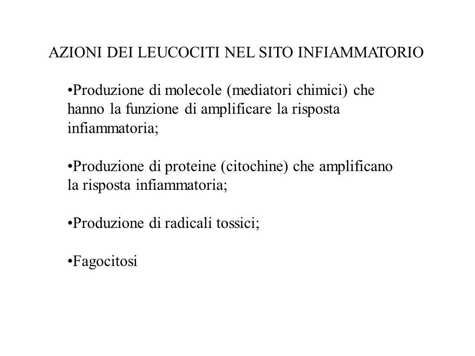 Fagociti professionali: Granulociti neutrofili Monociti Macrofagi Cellule dendritiche Fagociti non professionali: Cellule epiteliali (tiroide, vescica, retina, etc.) Fibroblasti AZIONI DEI LEUCOCITI NEL SITO INFIAMMATORIO Eliminazione patogeni Attivazione immunità specifica