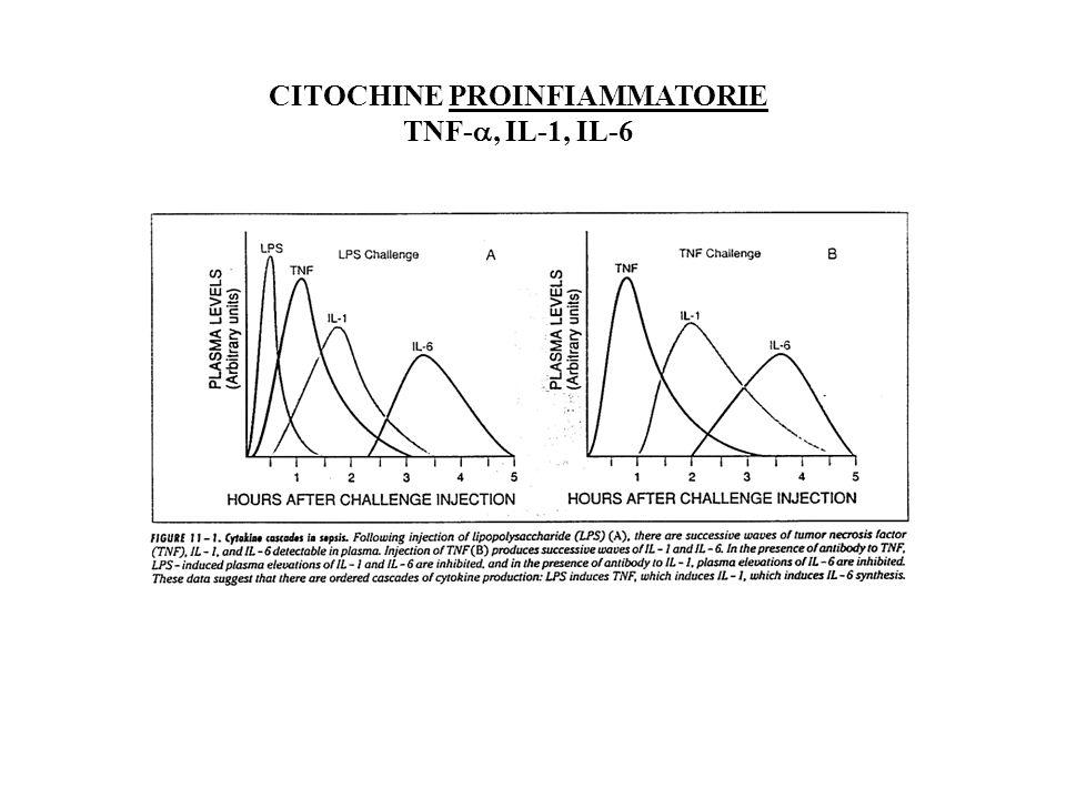 CITOCHINE PROINFIAMMATORIE TNF-, IL-1, IL-6