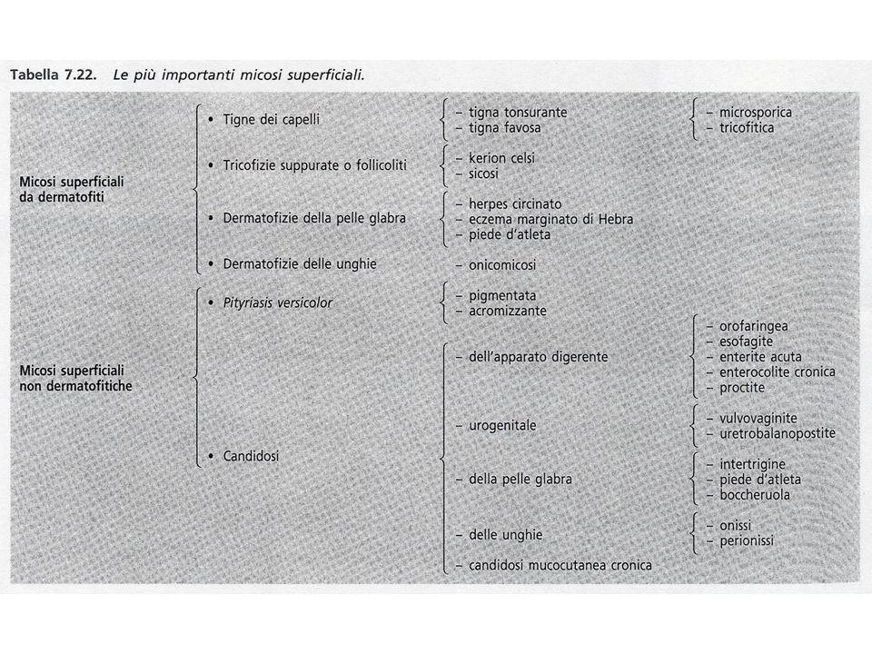MICOSI SUPERFICIALI TIGNE DEI CAPELLI: Micosi contagiosissime: contatto diretto, uso comune di pettini, spazzole, copricapi.