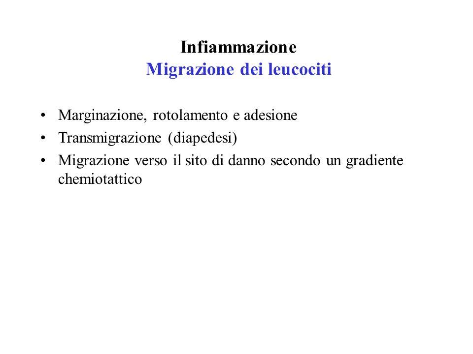 Infiammazione Migrazione dei leucociti Marginazione, rotolamento e adesione Transmigrazione (diapedesi) Migrazione verso il sito di danno secondo un g