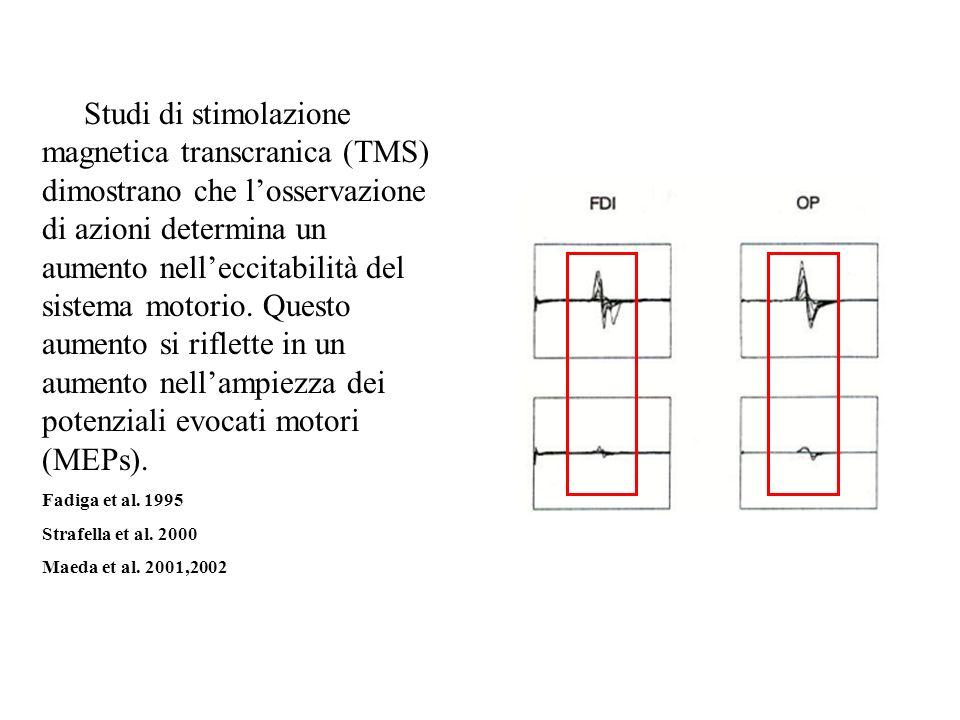 A) Studi di stimolazione magnetica transcranica (TMS) dimostrano che losservazione di azioni determina un aumento nelleccitabilità del sistema motorio