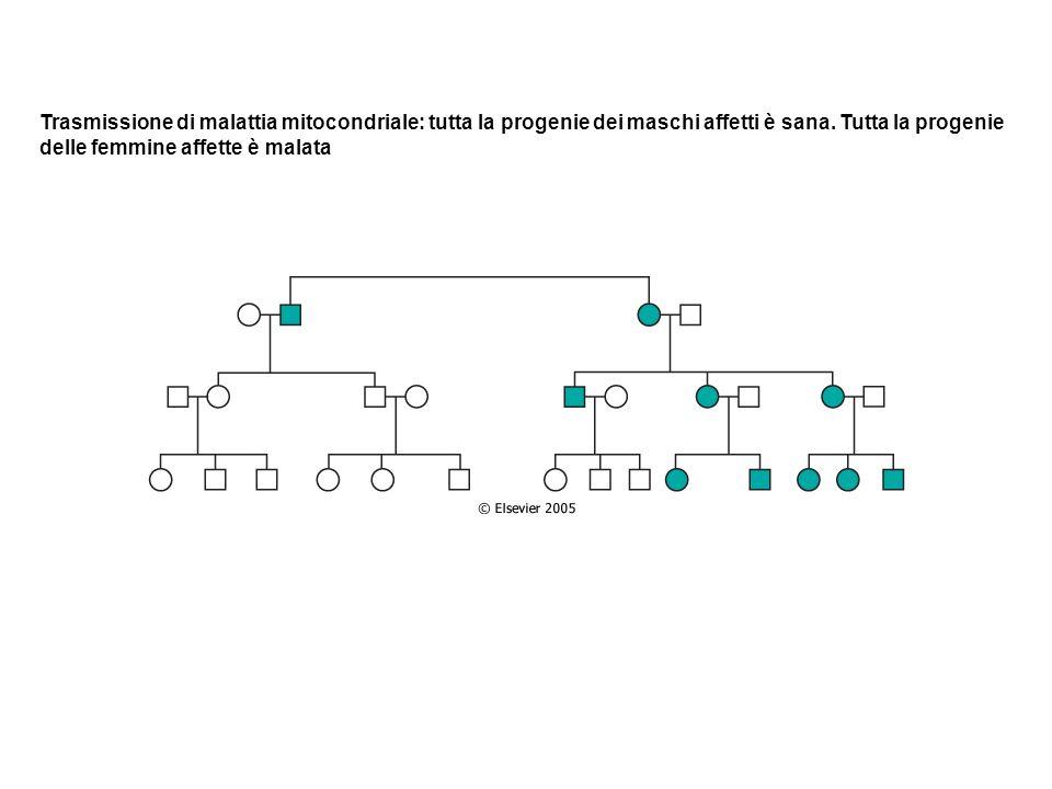 Trasmissione di malattia mitocondriale: tutta la progenie dei maschi affetti è sana. Tutta la progenie delle femmine affette è malata