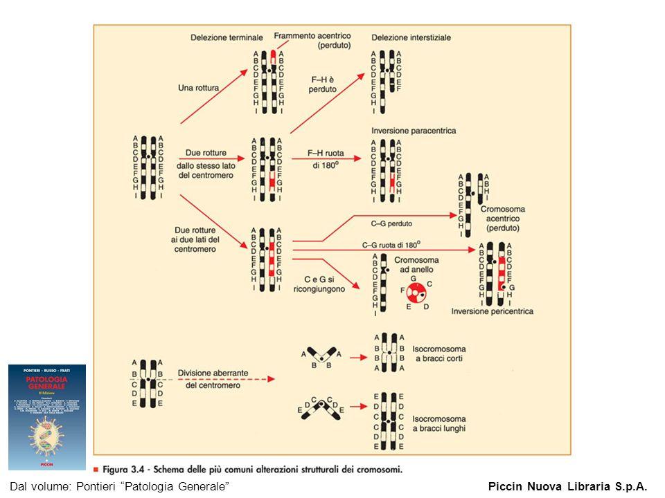 Figura 3.4 - Schema delle più comuni alterazioni strutturali dei cromosomi. Dal volume: Pontieri Patologia GeneralePiccin Nuova Libraria S.p.A.