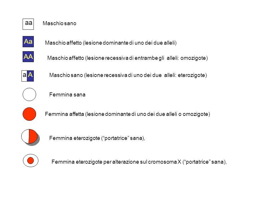 Aa Maschio sano Maschio affetto (lesione dominante di uno dei due alleli) Femmina eterozigote (portatrice sana), Femmina sana Femmina affetta (lesione