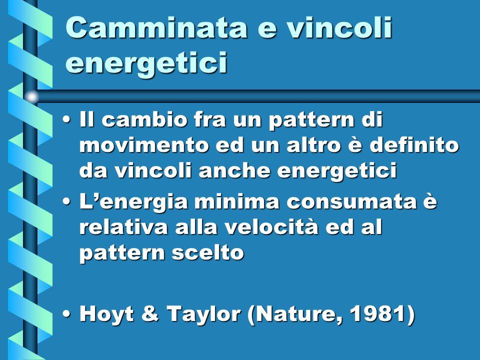 Camminata e vincoli energetici Il cambio fra un pattern di movimento ed un altro è definito da vincoli anche energeticiIl cambio fra un pattern di mov