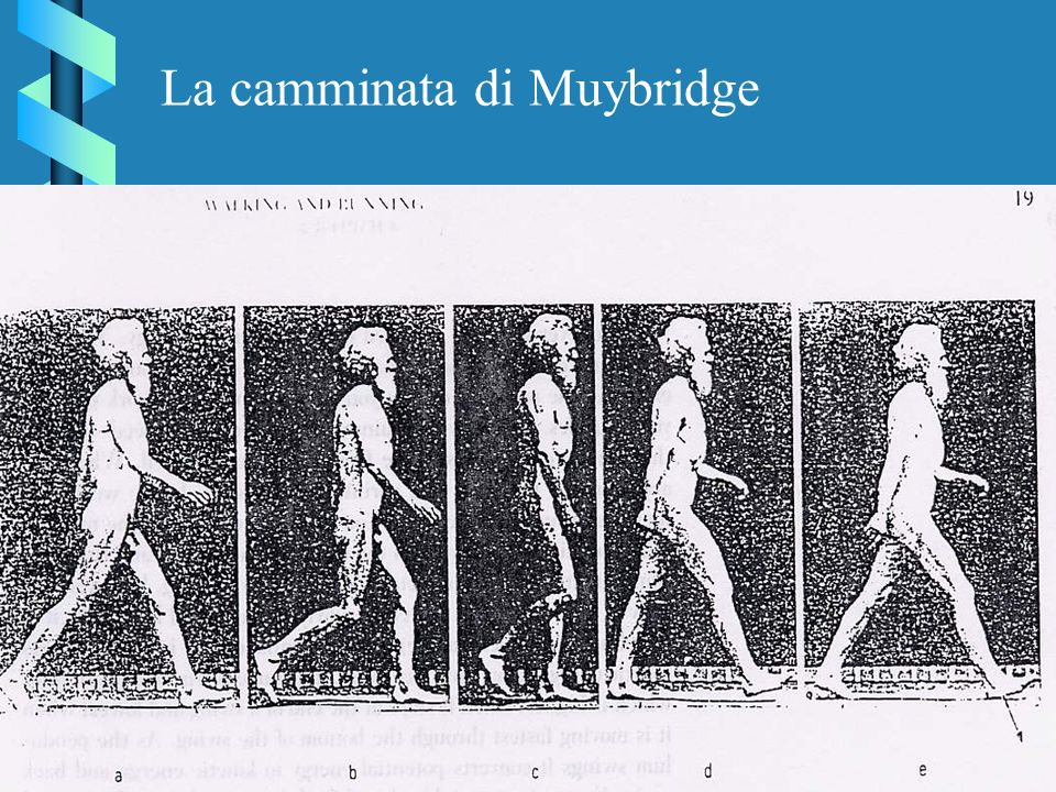 La camminata di Muybridge