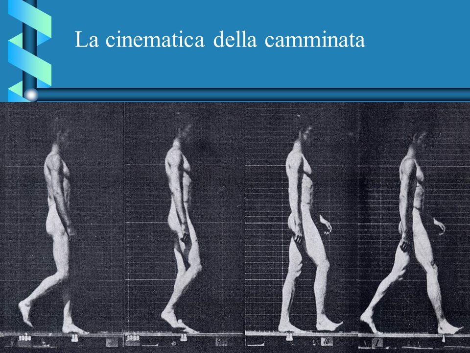 La cinematica della camminata
