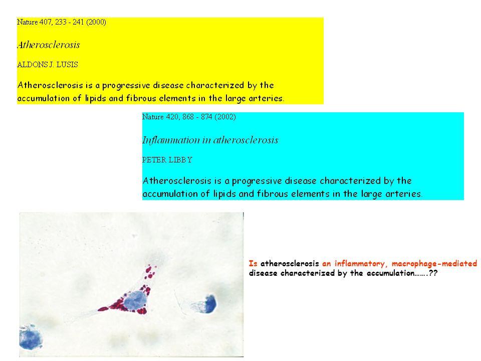 monocito foam cell apoptotica STRIA LIPIDICA PLACCA FIBROSA SMC cell.
