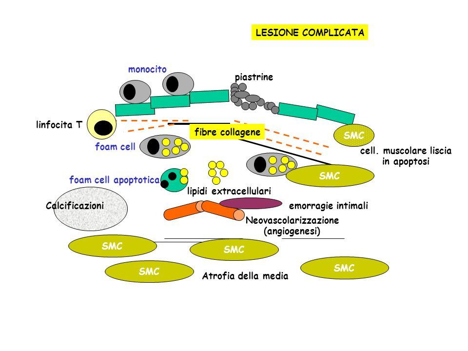 FEGATO VIE BILIARI Sali biliari colestiramina acetilCoAcolesterolo HMGCoAR* *hydroxymethyl-glutaryl-CoA reductase - statine FEGATO E TESSUTI PERIFERICI VLDL (diminuita sintesi) acido nicotinico