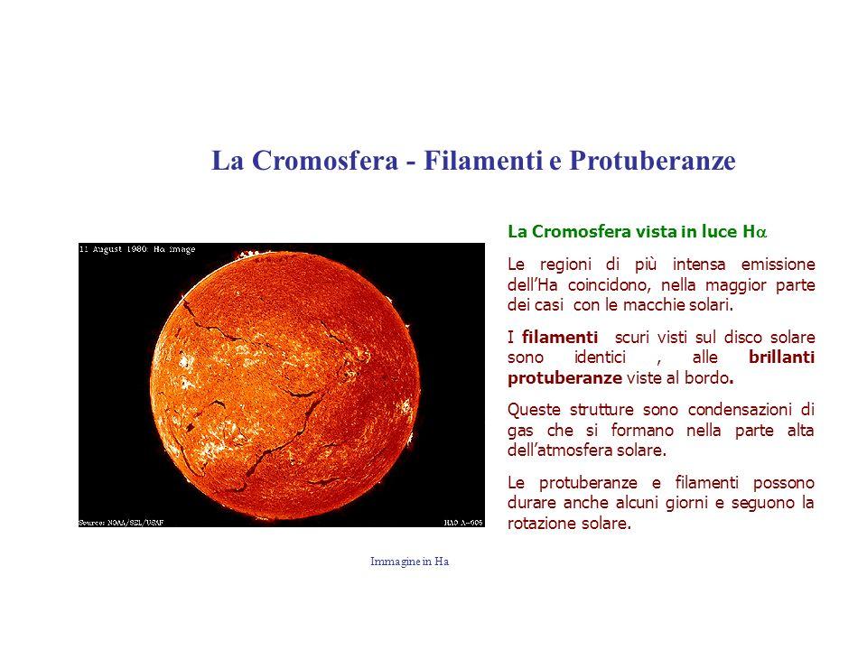 La Cromosfera vista in luce H Le regioni di più intensa emissione dellHa coincidono, nella maggior parte dei casi con le macchie solari. I filamenti s