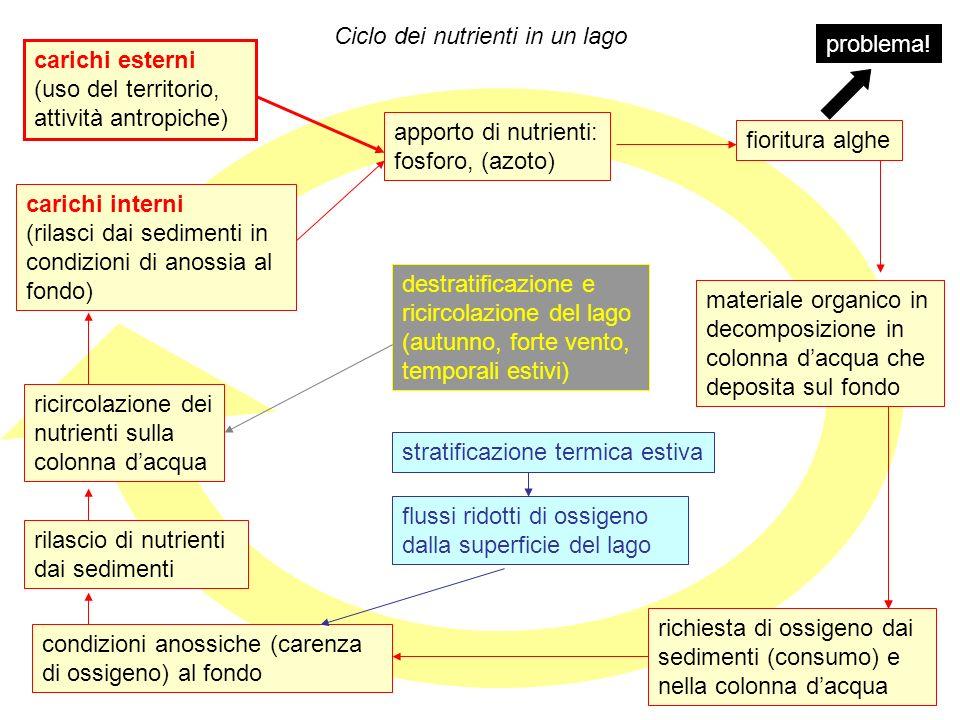 58 Ciclo dei nutrienti in un lago carichi esterni (uso del territorio, attività antropiche) apporto di nutrienti: fosforo, (azoto) fioritura alghe car