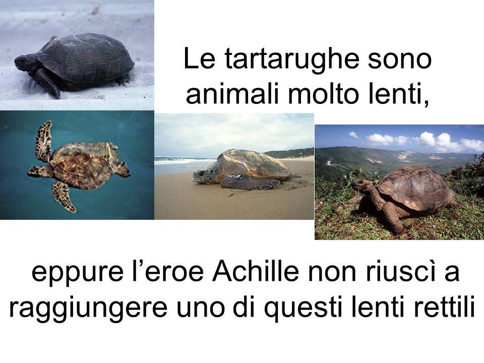 Le tartarughe sono animali molto lenti, eppure leroe Achille non riuscì a raggiungere uno di questi lenti rettili