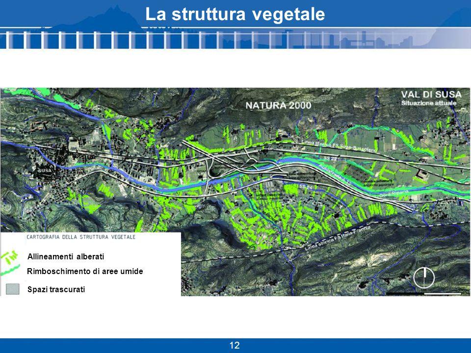 La struttura vegetale Allineamenti alberati Rimboschimento di aree umide Spazi trascurati 12