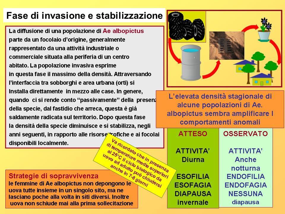 Fase di invasione e stabilizzazione