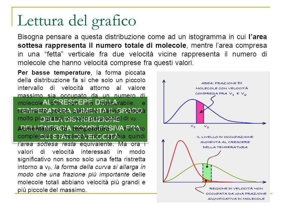 Lettura del grafico Bisogna pensare a questa distribuzione come ad un istogramma in cui larea sottesa rappresenta il numero totale di molecole, mentre