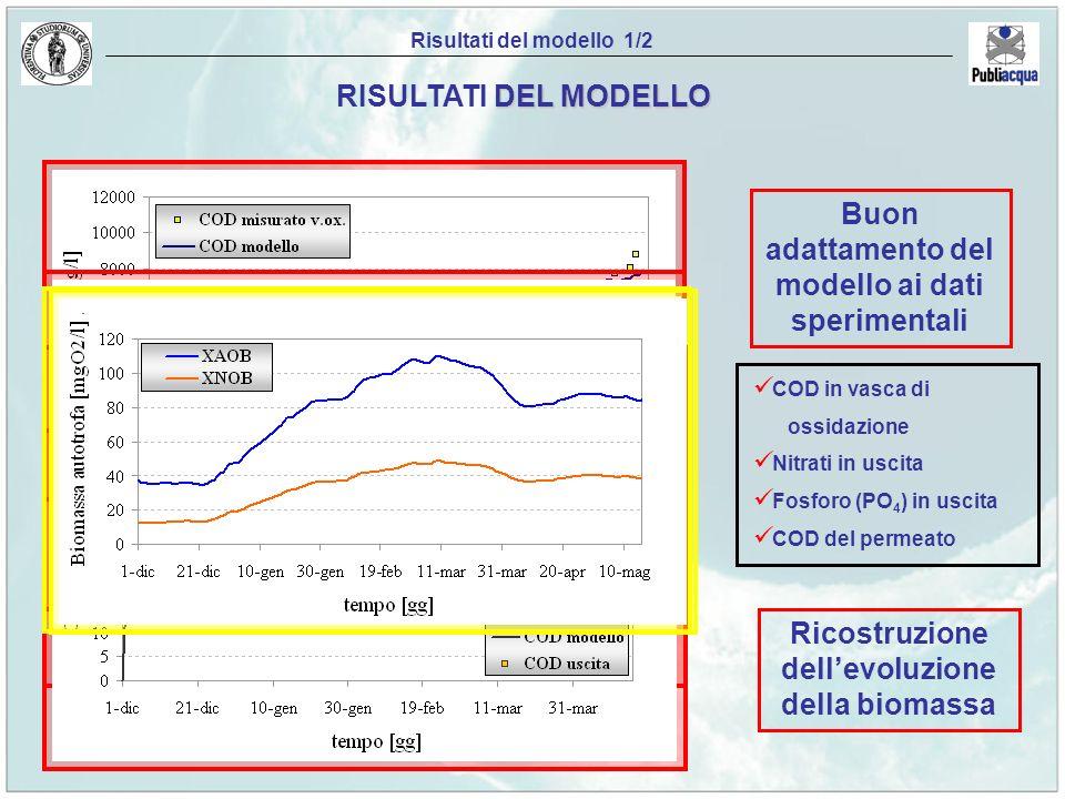 Ricostruzione dellevoluzione della biomassa Risultati del modello 1/2 DEL MODELLO RISULTATI DEL MODELLO Buon adattamento del modello ai dati speriment