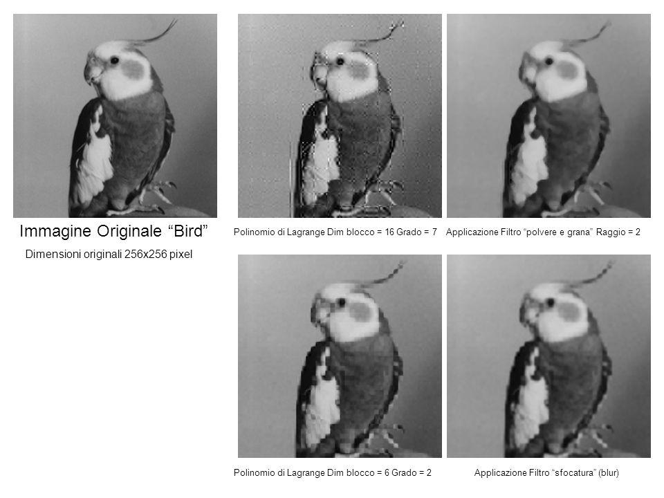 Immagine Originale Bird Polinomio di Lagrange Dim blocco = 16 Grado = 7Applicazione Filtro polvere e grana Raggio = 2 Polinomio di Lagrange Dim blocco = 6 Grado = 2Applicazione Filtro sfocatura (blur) Dimensioni originali 256x256 pixel