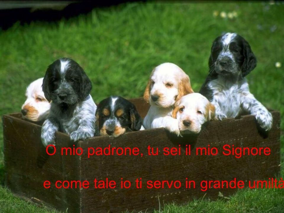 La preghiera del cane