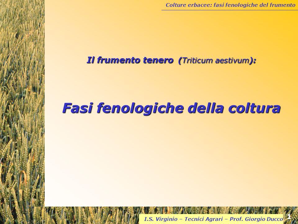 Colture erbacee: fasi fenologiche del frumento 1 I.S. Virginio – Tecnici Agrari – Prof. Giorgio Ducco Il frumento tenero (Triticum aestivum): Fasi fen