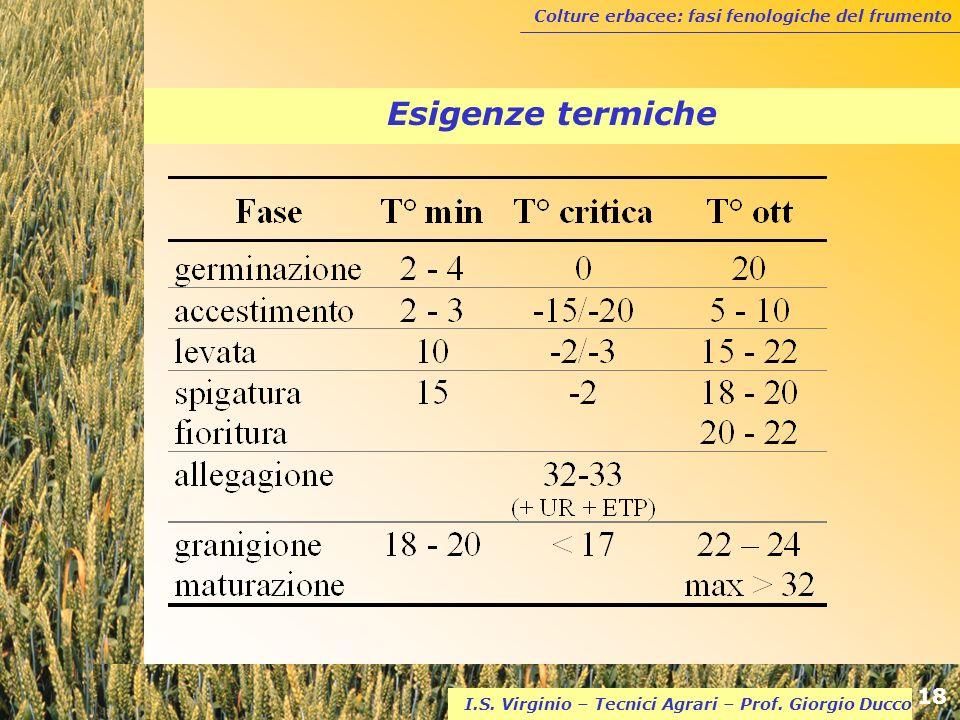 Colture erbacee: fasi fenologiche del frumento 18 I.S. Virginio – Tecnici Agrari – Prof. Giorgio Ducco Esigenze termiche