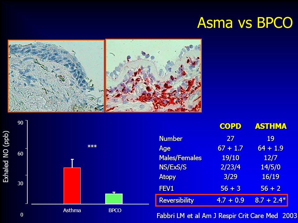 Fabbri LM et al Am J Respir Crit Care Med 2003 Asma vs BPCOCOPDASTHMANumberAgeMales/FemalesNS/ExS/SAtopy27 67 + 1.7 19/102/23/43/2919 64 + 1.9 12/714/5/016/19 FEV1 56 + 3 56 + 2 Reversibility 4.7 + 0.9 8.7 + 2.4* Asthma BPCO *** 90 60 30 0 Exhaled NO (ppb)