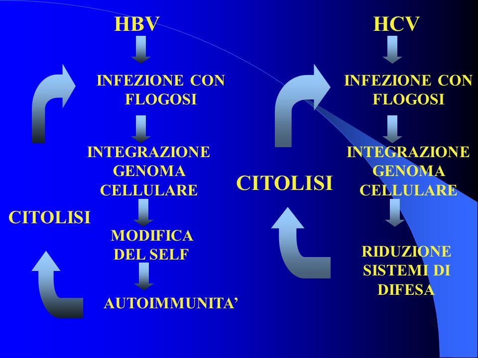 HBV INFEZIONE CON FLOGOSI INTEGRAZIONE GENOMA CELLULARE MODIFICA DEL SELF AUTOIMMUNITA CITOLISI HCV INFEZIONE CON FLOGOSI INTEGRAZIONE GENOMA CELLULARE RIDUZIONE SISTEMI DI DIFESA CITOLISI