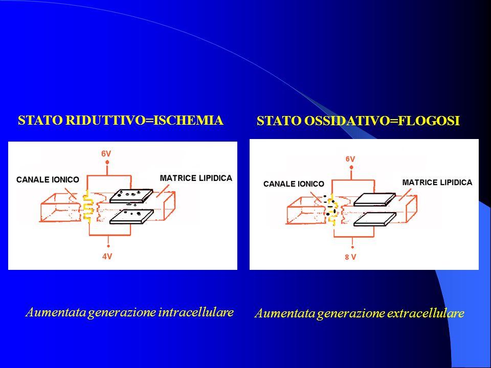 STATO RIDUTTIVO=ISCHEMIA STATO OSSIDATIVO=FLOGOSI Aumentata generazione intracellulare Aumentata generazione extracellulare
