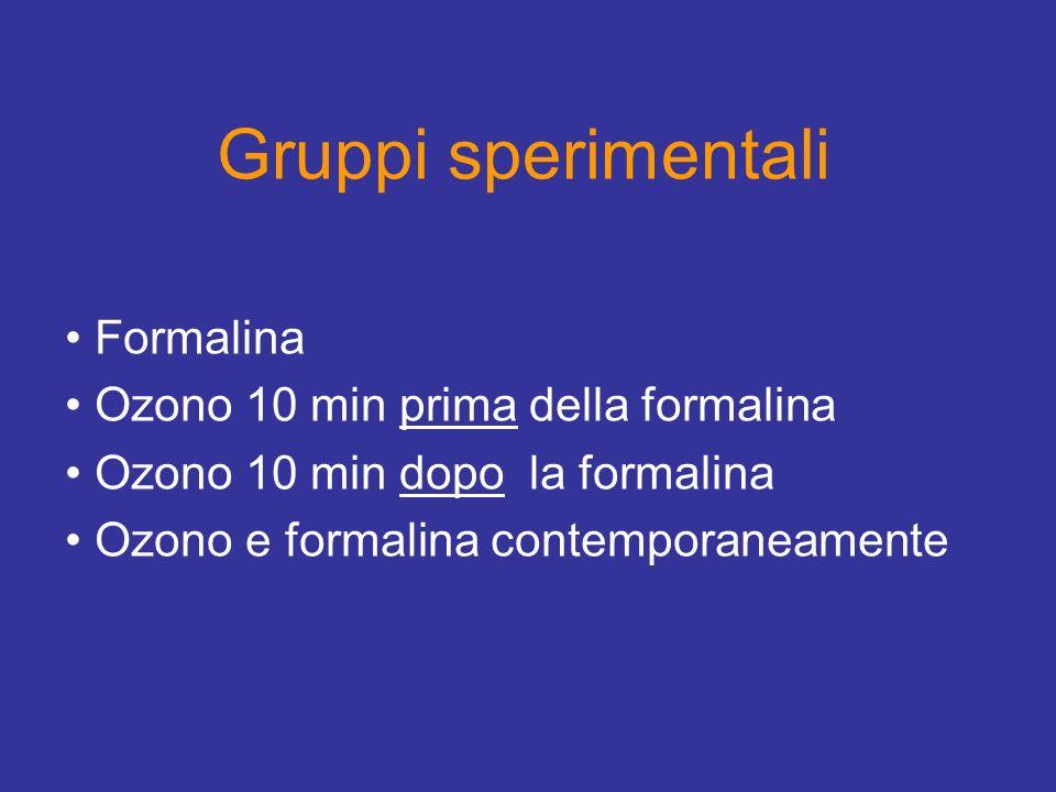 Gruppi sperimentali Formalina Ozono 10 min prima della formalina Ozono 10 min dopo la formalina Ozono e formalina contemporaneamente