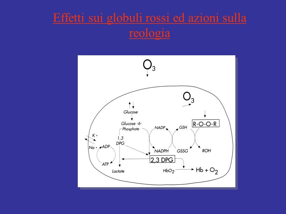 Effetti sui globuli rossi ed azioni sulla reologia