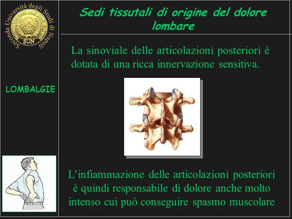 La sinoviale delle articolazioni posteriori è dotata di una ricca innervazione sensitiva.