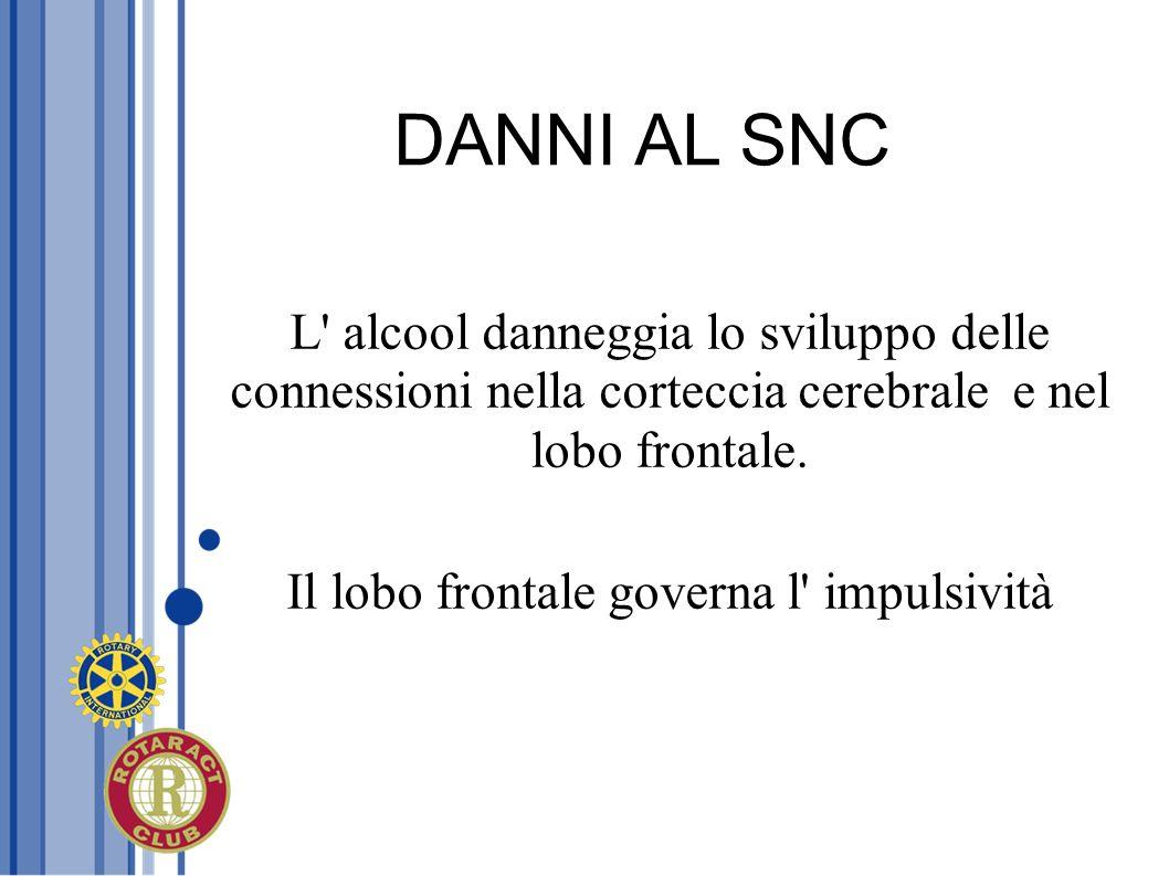 DANNI AL SNC L' alcool danneggia lo sviluppo delle connessioni nella corteccia cerebrale e nel lobo frontale. Il lobo frontale governa l' impulsività