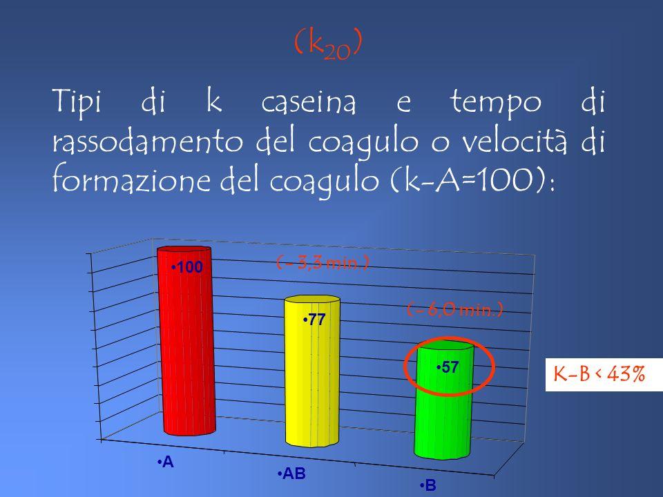 A AB B 100 77 57 K-B < 43% (- 3,3 min.) (- 6,0 min.) (k 20 ) Tipi di k caseina e tempo di rassodamento del coagulo o velocità di formazione del coagul