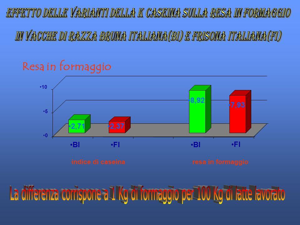 2,71 2,37 8,92 7,93 0 5 10 BIFIBIFI indice di caseina resa in formaggio Resa in formaggio