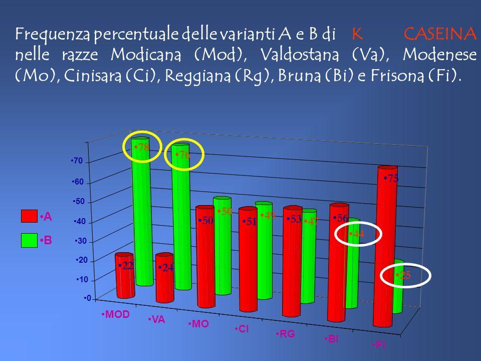 La variante B della k caseina contiene più k caseina rispetto alla variante A (+2%); La variante B è caratterizzata da un quadro micellare più uniforme; La variante B ha un maggior contenuto e maggior indice di caseina; Le varianti genetiche della k caseina hanno significativi effetti su: Parametri di coagulazione [(r),(k 20 ),(a 30 )]: Tempo di coagulazione del latte (r) Velocità di rassodamento del coagulo (k 20 ) Consistenza del coagulo (a 30 )