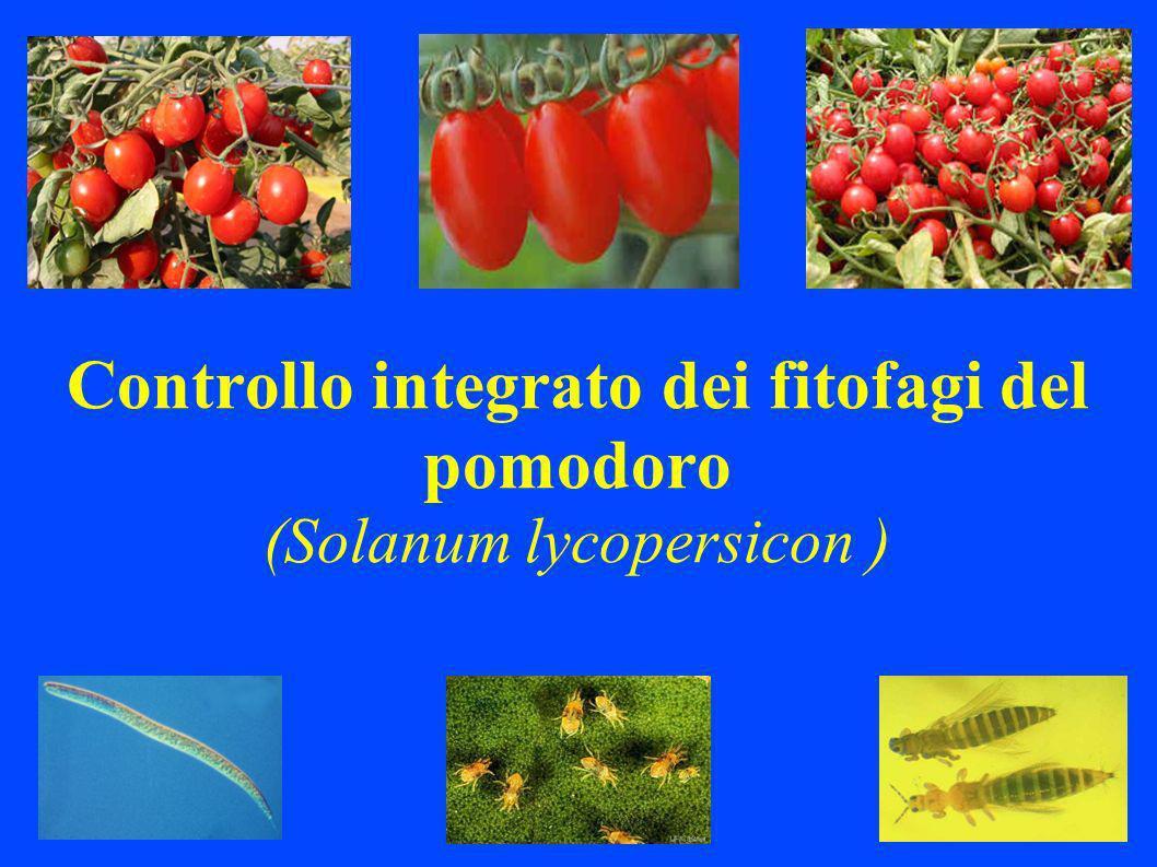 Controllo integrato dei fitofagi del pomodoro (Solanum lycopersicon )