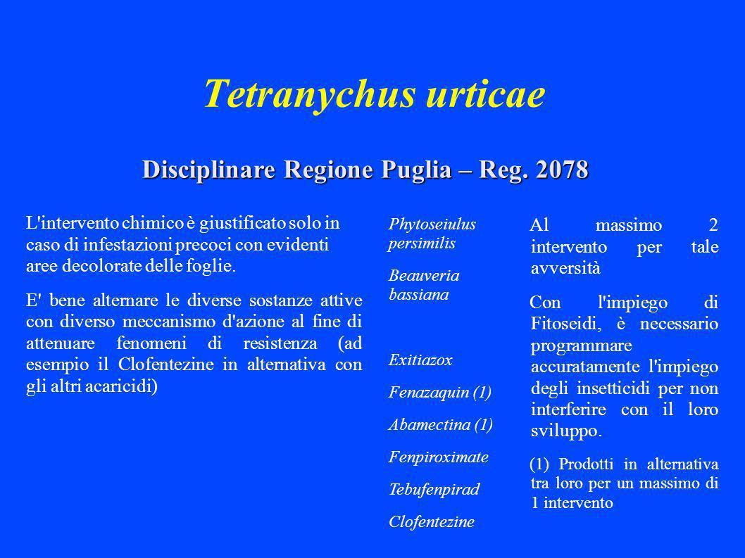 Tetranychus urticae Al massimo 2 intervento per tale avversità Con l impiego di Fitoseidi, è necessario programmare accuratamente l impiego degli insetticidi per non interferire con il loro sviluppo.