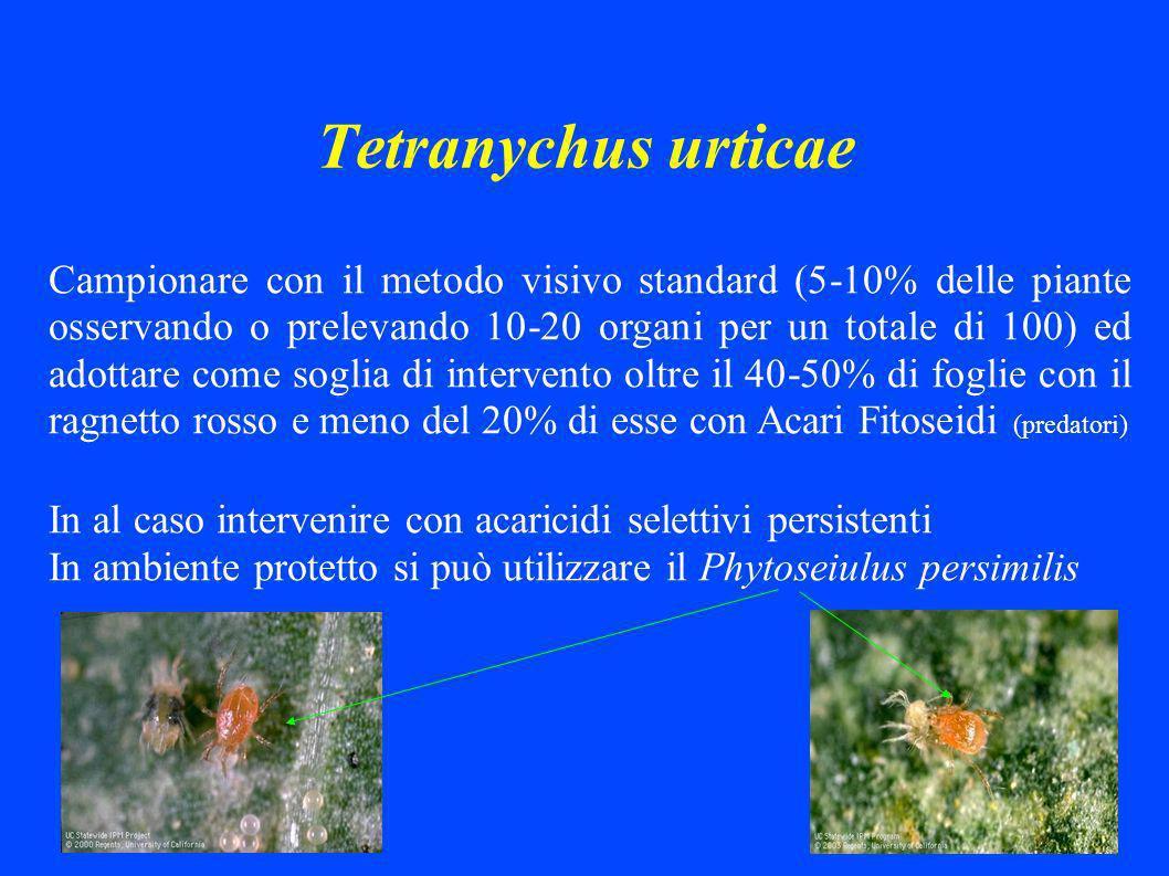 Tetranychus urticae Campionare con il metodo visivo standard (5-10% delle piante osservando o prelevando 10-20 organi per un totale di 100) ed adottare come soglia di intervento oltre il 40-50% di foglie con il ragnetto rosso e meno del 20% di esse con Acari Fitoseidi (predatori) In al caso intervenire con acaricidi selettivi persistenti In ambiente protetto si può utilizzare il Phytoseiulus persimilis